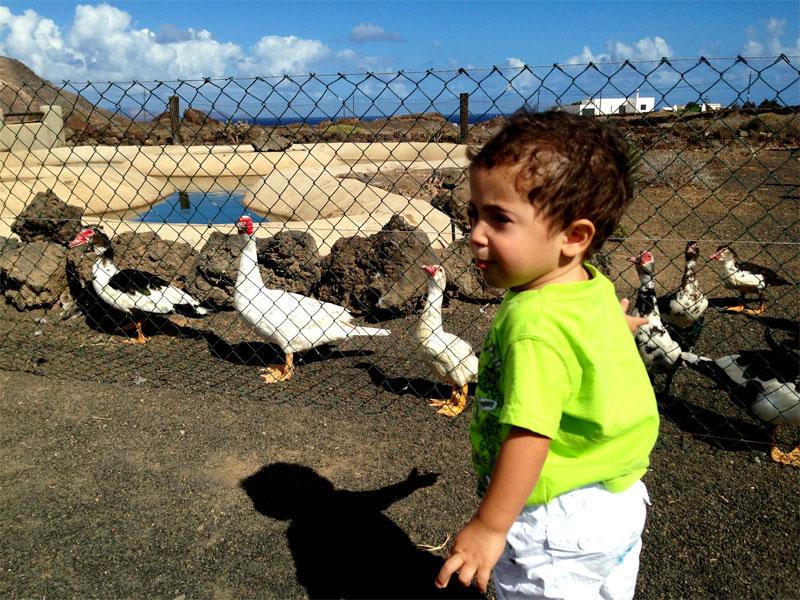 Los niños dan de comer a los animales en Las Pardelas Park Lanzarote (Órzola)