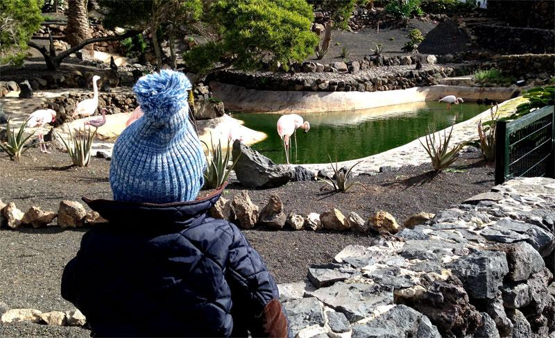 Fotografía del Guinate Tropical Park (Lanzarote), el estanque de flamencos y patos