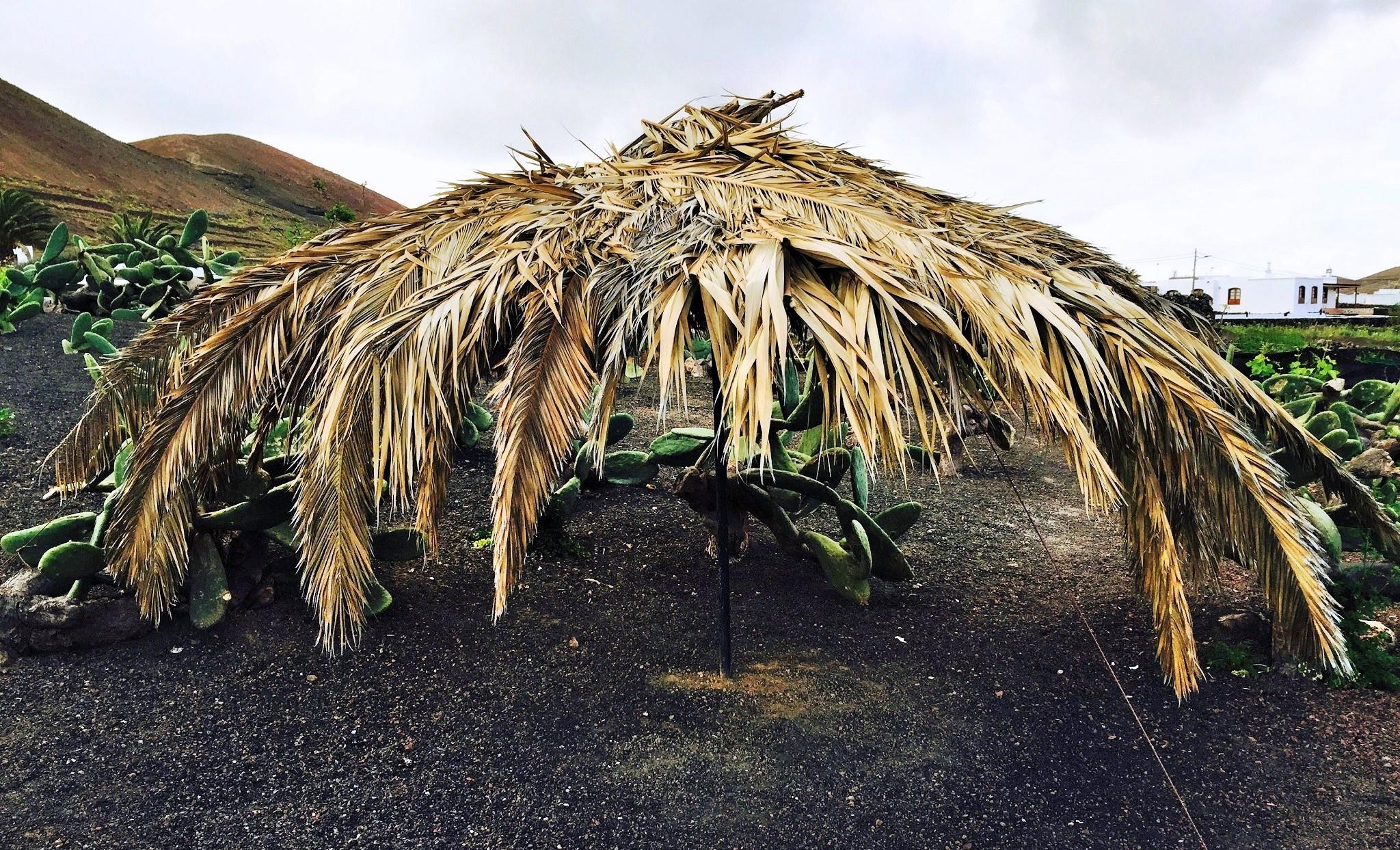 Área de reposo del cultivador de cochinilla