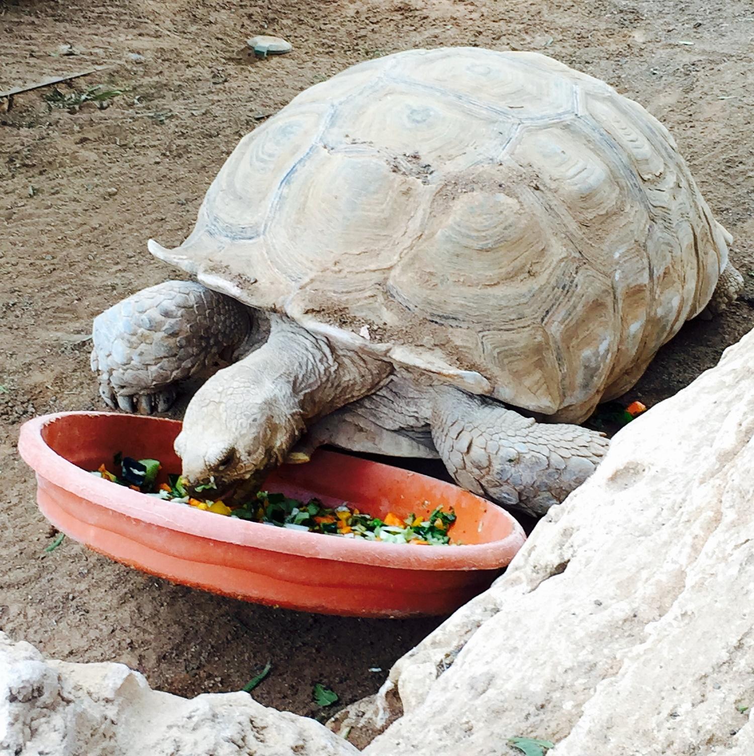 El desayuno de la tortuga