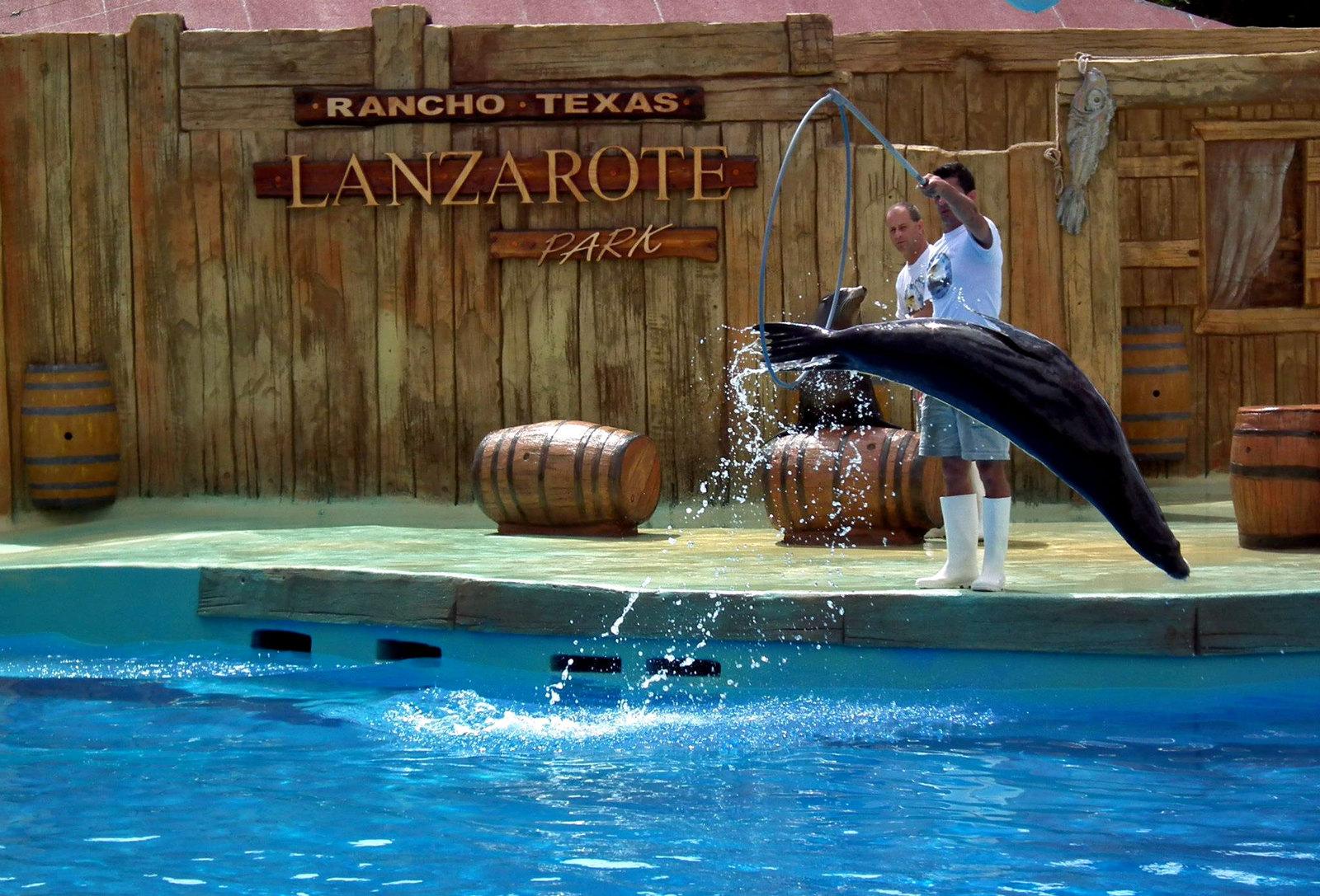 El show del león marino en Rancho Texas Park Lanzarote